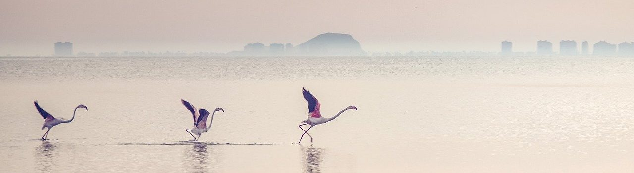 waterscape-flamingos-lagoon-5541692.jpg